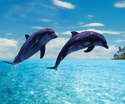 Mauritius Swimming with Dolphins and Whales Watching