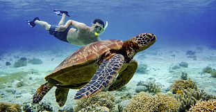 Snorkel with Turtles - 2 hour Private Boat Trip in the North