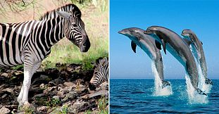 Dolphins - Chamarel - Safari Bird Park - 1 Day Package