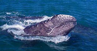Exclusive Whale Watching - 3 Hours