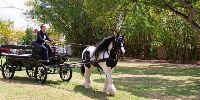 Horse carriage ride in the north of mauritius (2)