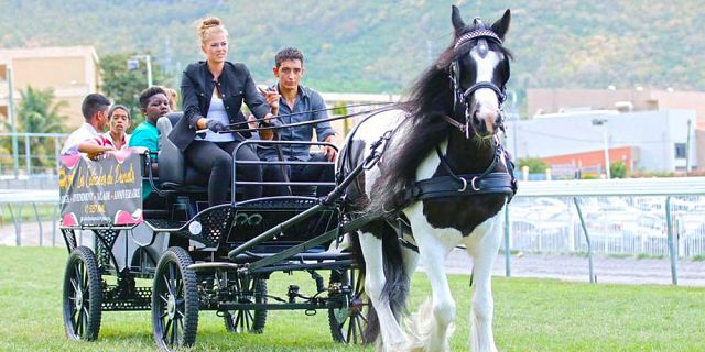 Horse carriage ride in the north of mauritius (3)