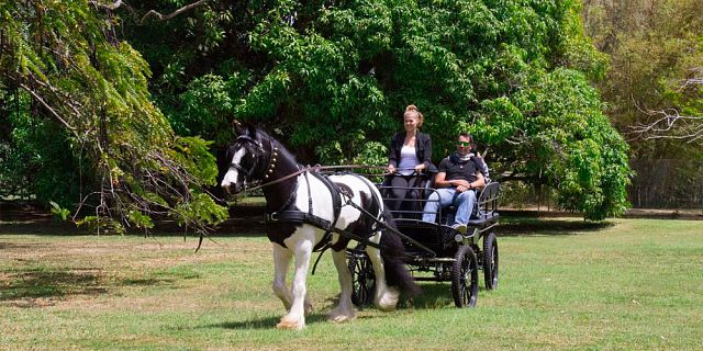 Horse carriage ride in the north of mauritius (4)