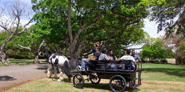 Horse carriage ride in the north of mauritius (5)