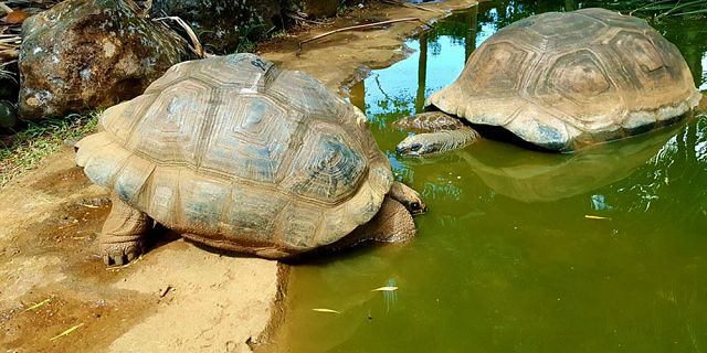 Themed adventure packages at crocodile giant tortoises park  (9)
