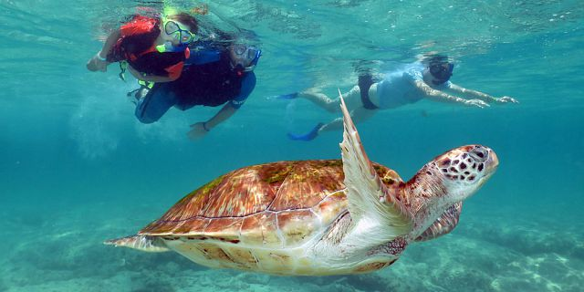 Snorkel with turtles 2 hour private boat trip in the north (1)