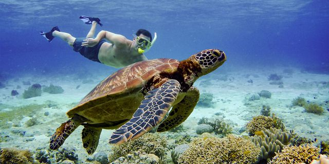 Snorkel with turtles 2 hour private boat trip in the north (2)