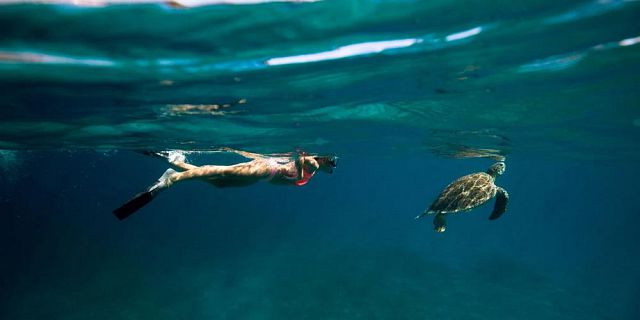 Snorkel with turtles 2 hour private boat trip in the north (3)