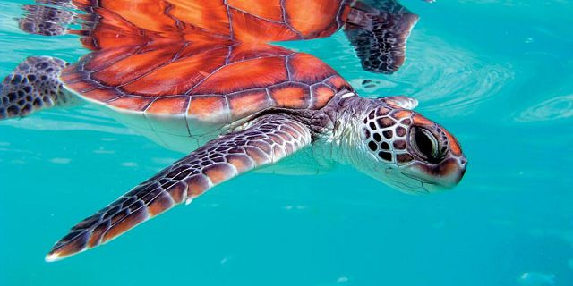 Snorkel with turtles 2 hour private boat trip in the north (4)