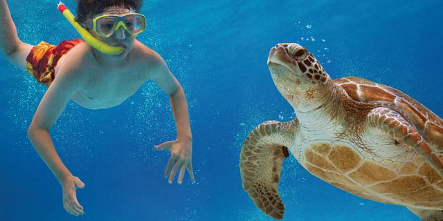 Snorkel with turtles 2 hour private boat trip in the north (6)