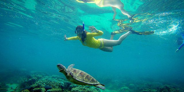Snorkel with turtles 2 hour private boat trip in the north (7)