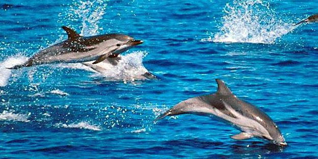 3 swimming with dolphins
