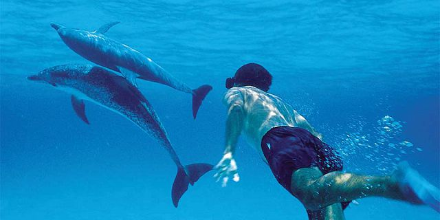 Swimming alongside dolphins mauritius