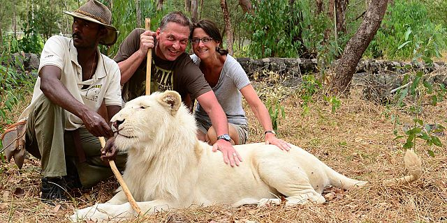 Petting lions in mauritius